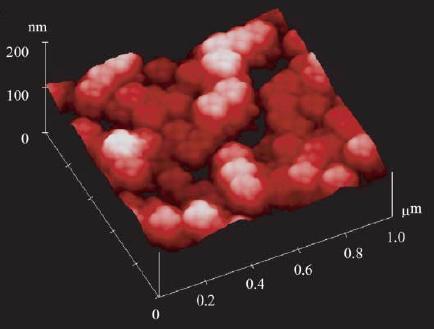 AFM image reproduced from Fig 1B of Shiigi et al